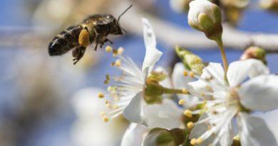 las abejas en el mundo cosmético