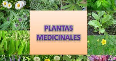 mejores plantas medicinales