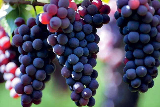 Tratamiento estético con uva