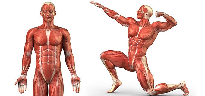 Concejos para incrementar la masa muscular