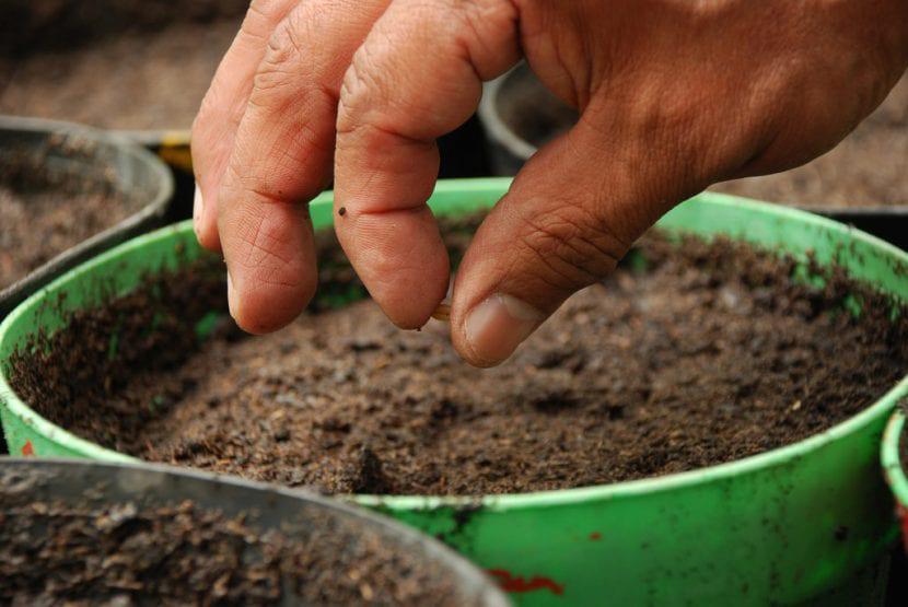 cultivar en macetas