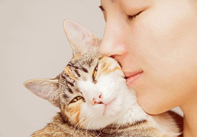 enfermedades de gatos comunes
