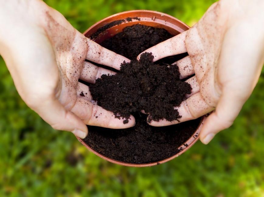 plantar semillas para macetas