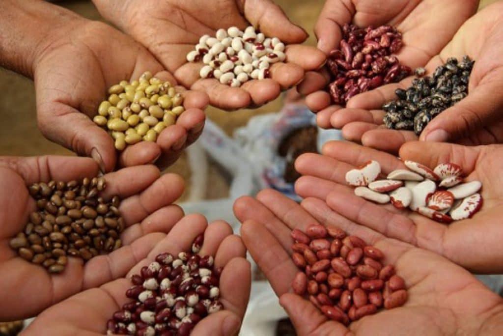 semillas para macetas